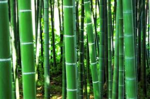 竹にはフシがある。